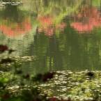 池に映るツツジ