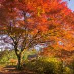 鳥見山の紅葉