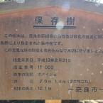 菩提樹の説明