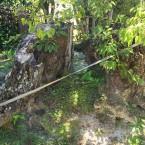 菩提樹の古木