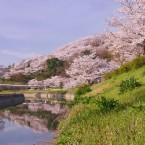春の竜田公園