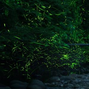 室生龍穴神社(ホタル)