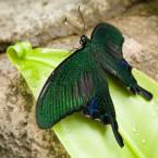 珍しい蝶が…