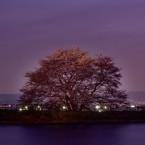 夜の幾坂池