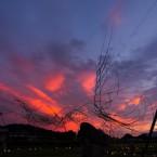 朱雀と夕焼け
