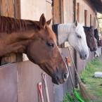 優秀な馬たち