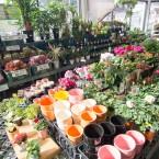 鉢植え、種苗
