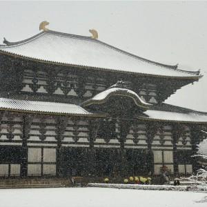 奈良公園(大仏殿周辺)
