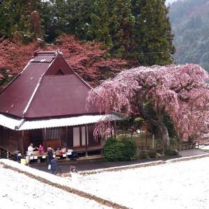 西光寺(城之山桜)