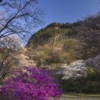 山桜とツツジ