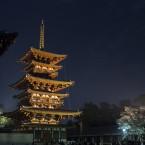 夜の薬師寺