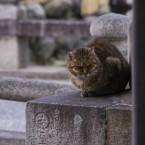 常夜灯の猫