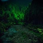 龍穴神社のホタル