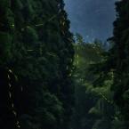 室生川の蛍