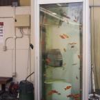 金魚BOX
