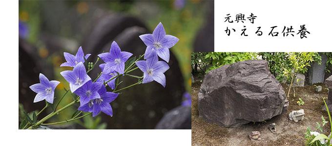 元興寺「かえる石供養」とキキョウ